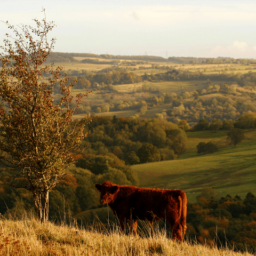 Immigration Boom: 25,000 Acres of Green Belt Countryside Sacrificed for Extra Housing