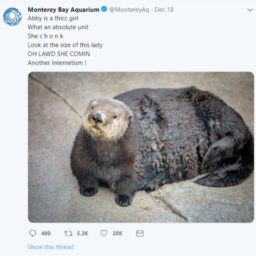 Aquarium Apologizes for Calling Otter Fat in 'Problematic… African American Vernacular'