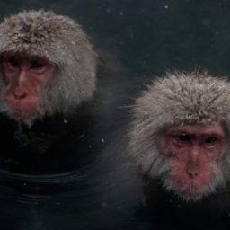 China Clones Genetically-Edited Schizophrenic Monkeys