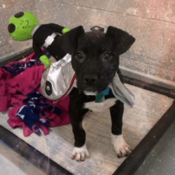 Animal Shelter Thanks Responders for Viral Area 51-Themed Post