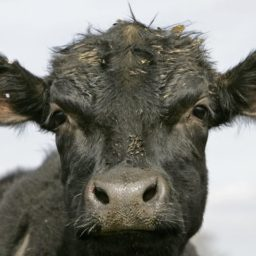 Illegal Immigrant Mistook Border Patrol Agent for Cow During Assault, Say Attorneys