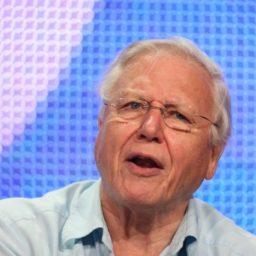 Delingpole: David 'Greta of the Third Age' Attenborough Launches BBC's Climate Bedwetting Blitzkrieg